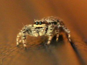 Lezing: Spinnen